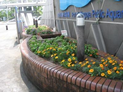 ガーデンふ頭総合案内所前花壇の植替えH28.6.15_d0338682_11385822.jpg
