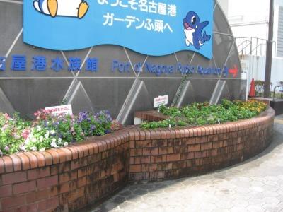 ガーデンふ頭総合案内所前花壇の植替えH28.6.15_d0338682_11392507.jpg