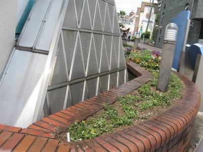ガーデンふ頭総合案内所前花壇の植替えH28.6.15_d0338682_11400199.jpg