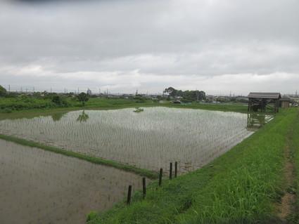 雨でよかった!・・・多奈川小学校  by  (ナベサダ)_f0053885_2041466.jpg