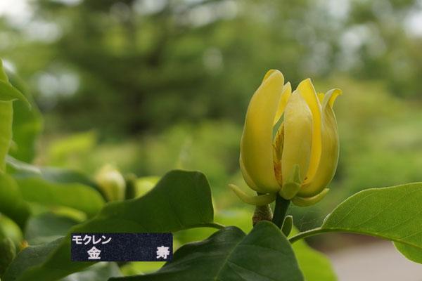 百合が原公園・・2_d0162994_831624.jpg