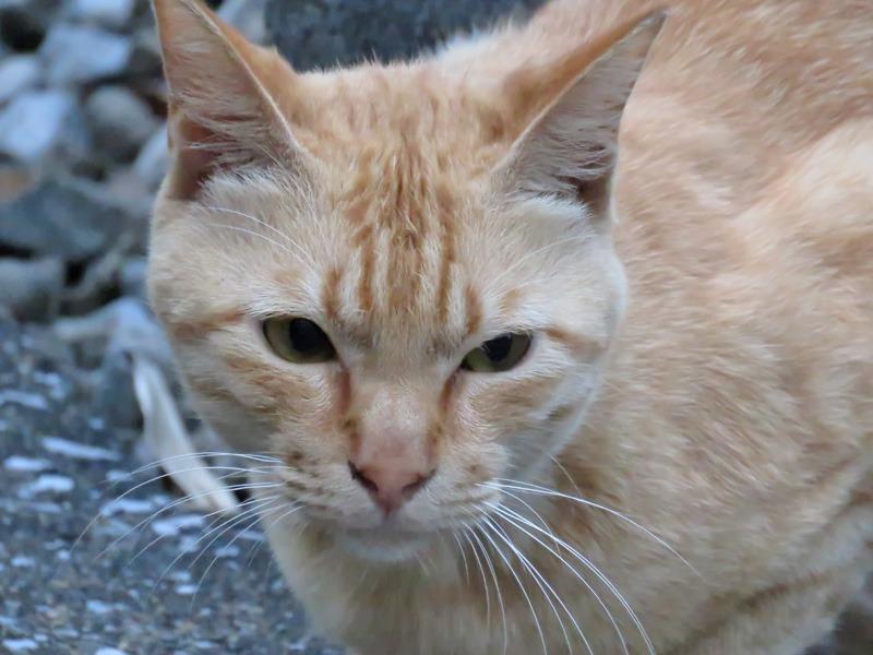 朝さんぽは猫をさがす旅と言っても過言ではない。。。_c0049299_22254976.jpg