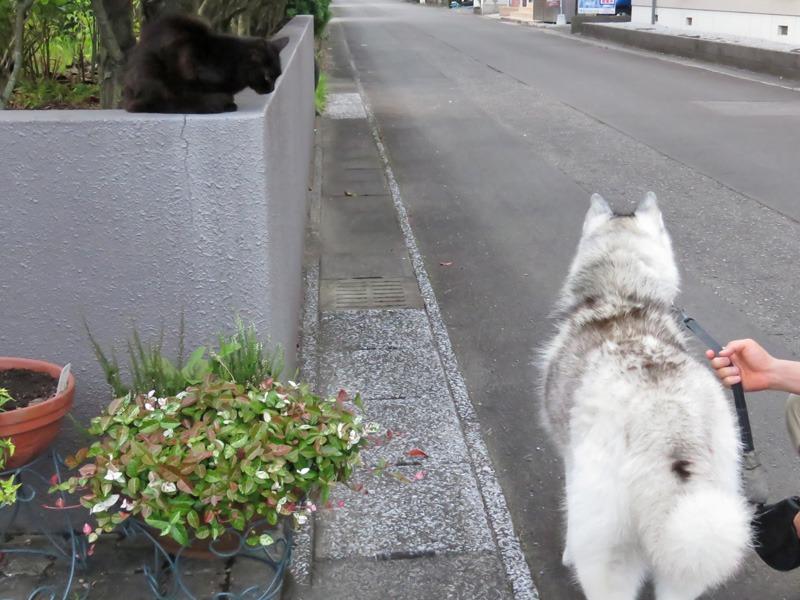 朝さんぽは猫をさがす旅と言っても過言ではない。。。_c0049299_22322638.jpg