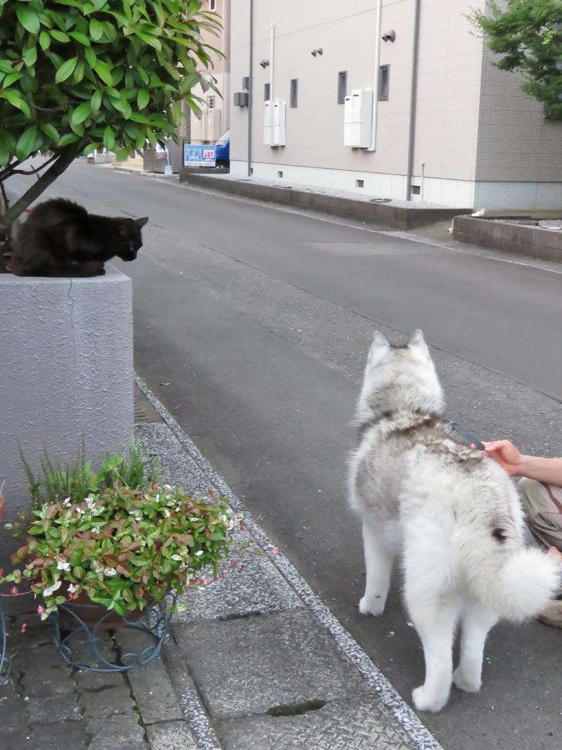 朝さんぽは猫をさがす旅と言っても過言ではない。。。_c0049299_22342331.jpg