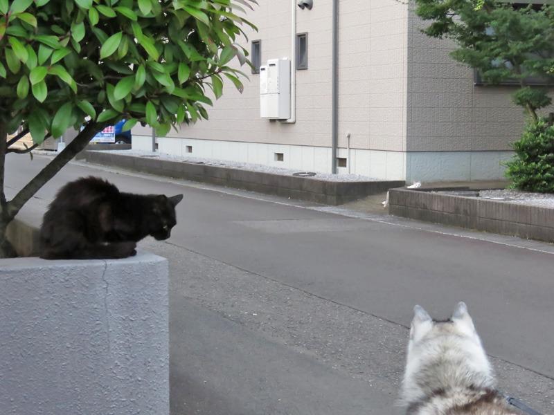 朝さんぽは猫をさがす旅と言っても過言ではない。。。_c0049299_2236377.jpg