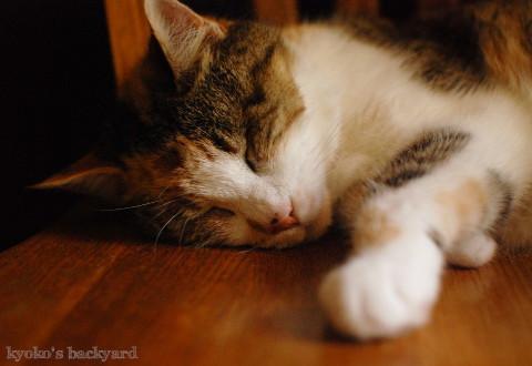 椅子の上で涼む猫_b0253205_07045804.jpg