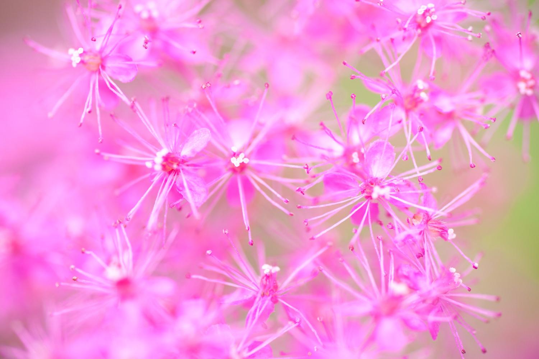 花が続きますが_c0220824_18492300.jpg