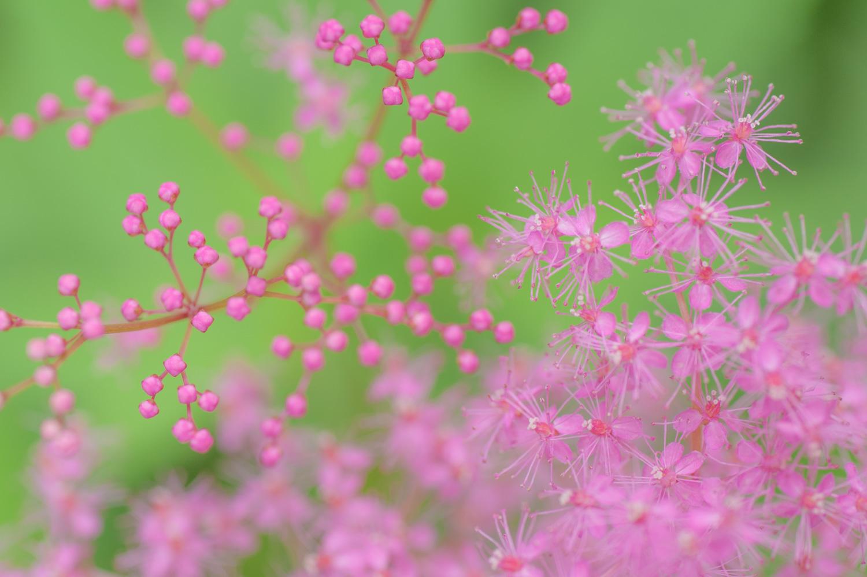 花が続きますが_c0220824_18492924.jpg