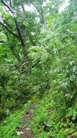 仙谷コース、倒木あり。現在通行不能。_f0101226_08504385.jpg
