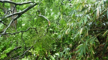 仙谷コース、倒木あり。現在通行不能。_f0101226_08505904.jpg