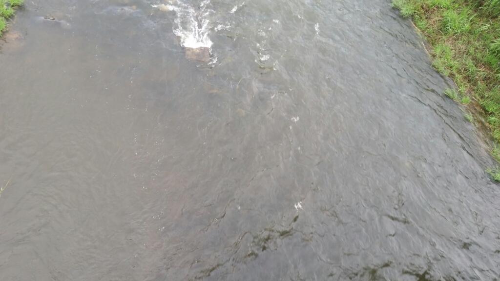 6月17日河川情報。_c0266737_06132744.jpg