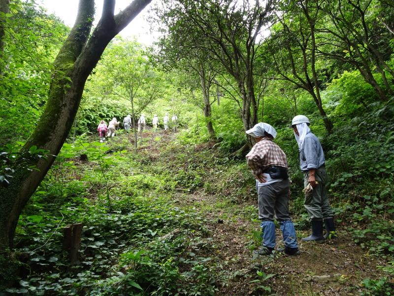 モミジバイチゴと大奮闘・・・孝子の森  by  (TATE-misaki)_c0108460_22342674.jpg