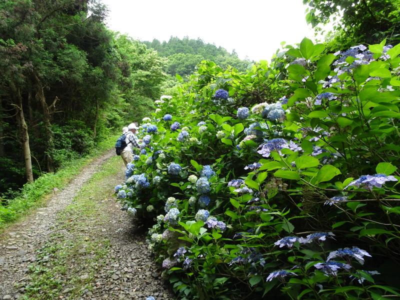 モミジバイチゴと大奮闘・・・孝子の森  by  (TATE-misaki)_c0108460_22372705.jpg