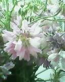 d0340774_20015486.jpg