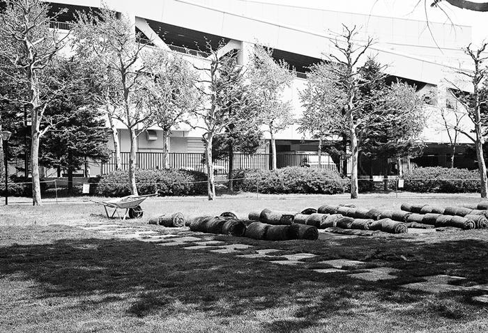 芝の再生作業_c0182775_1813072.jpg