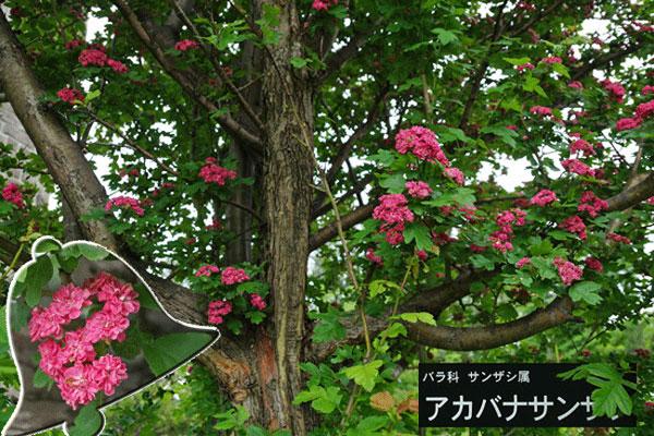百合が原公園・・3_d0162994_8141189.jpg