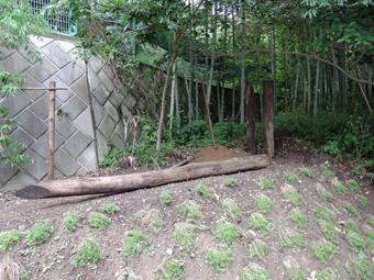 山泰荘の造園工事・・・その3。「 木の杭 」_c0195909_1026134.jpg