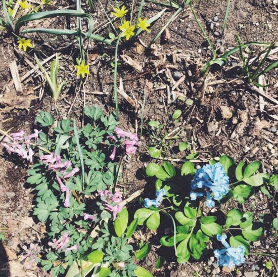 5月 収穫と開花記録_f0032814_17152650.jpg