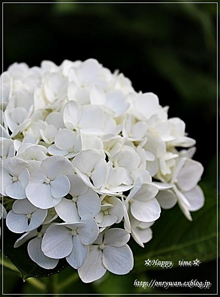 かにかまコロッケ弁当と紫陽花☆アナベル♪_f0348032_18253614.jpg