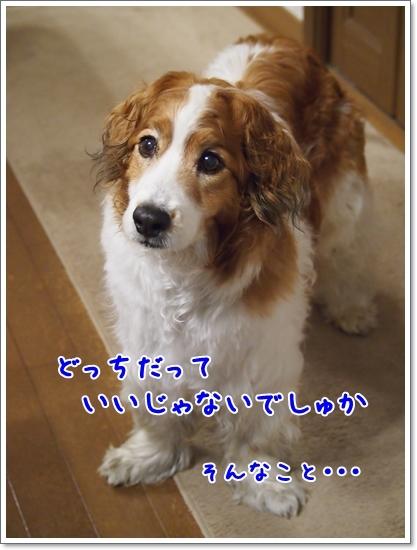 d0013149_00411011.jpg