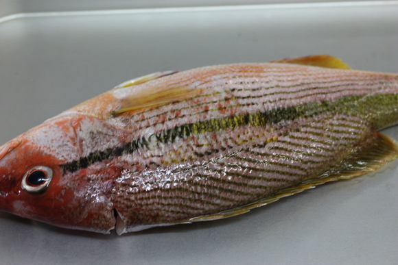6月の美味しい魚_b0193555_028269.jpg