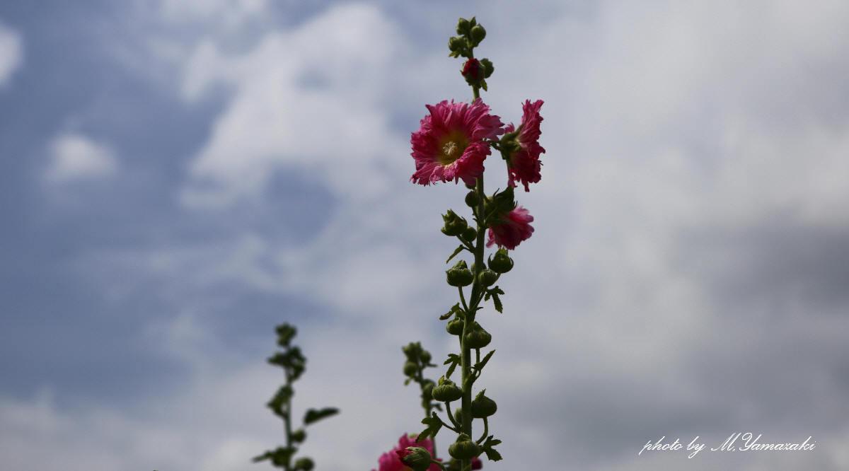 夏が来た_c0217255_06585760.jpg