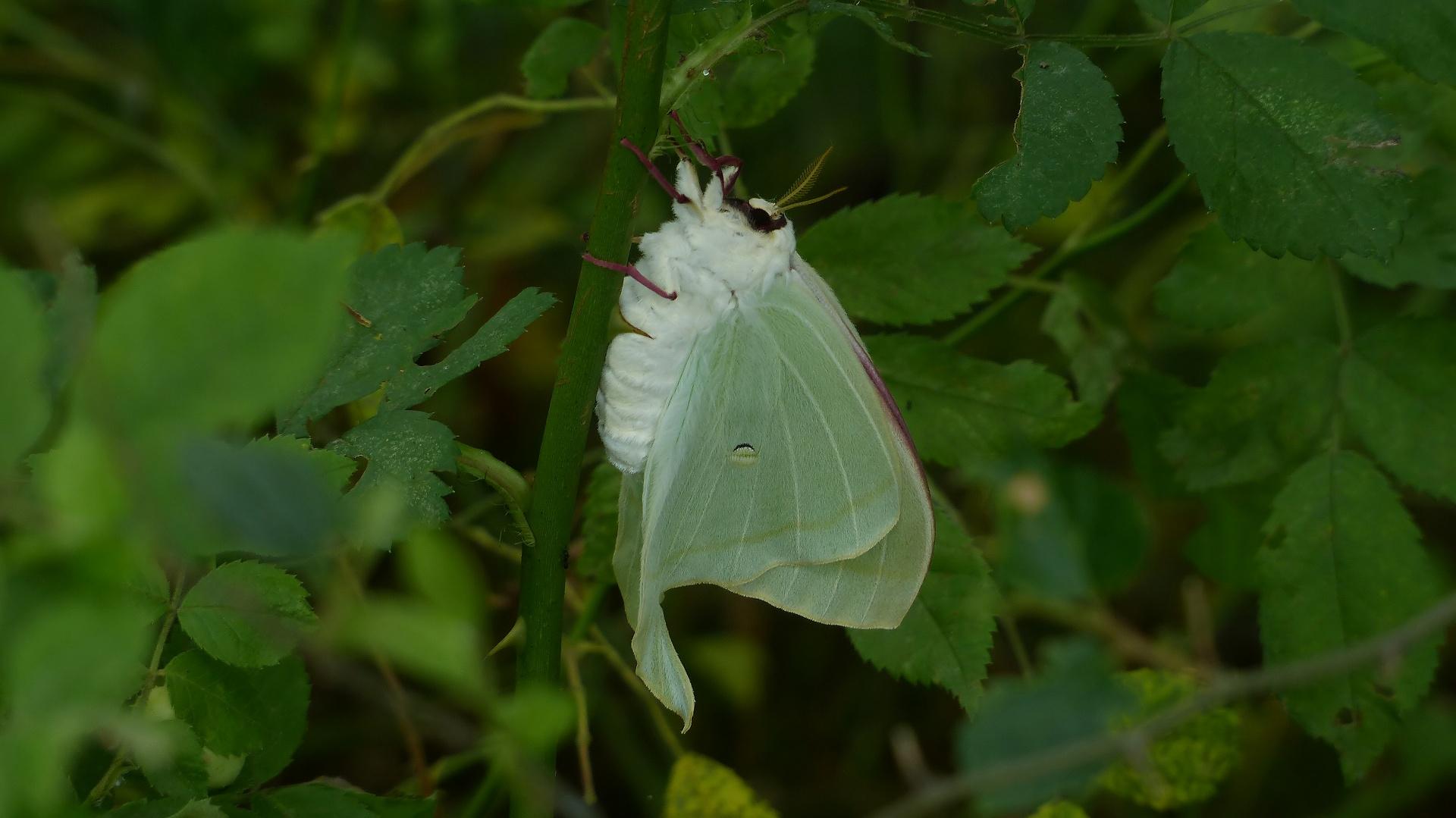 昆虫の森シリーズ 夕顔瓢箪とも呼ばれます_a0185081_11401689.jpg