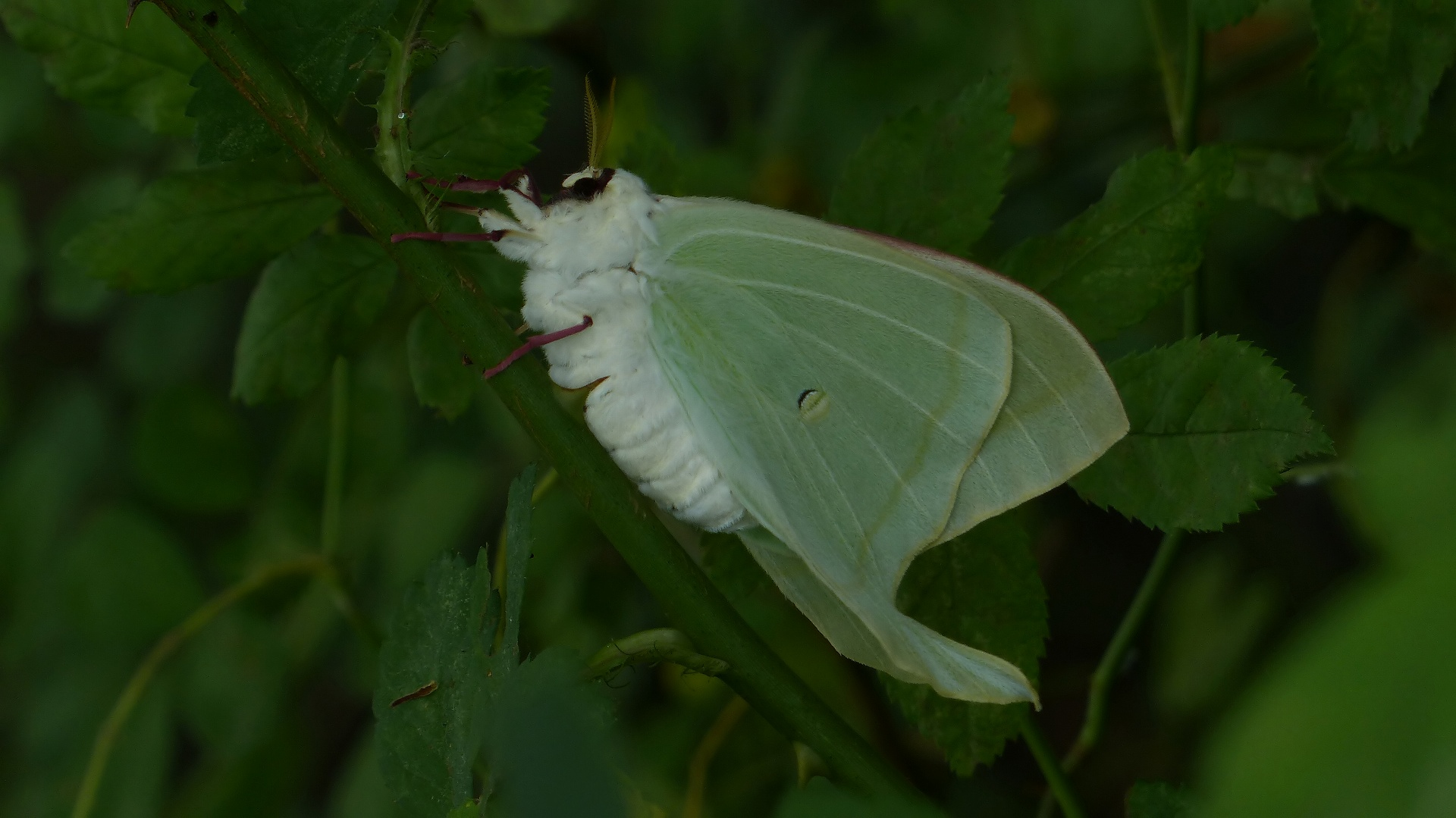 昆虫の森シリーズ 夕顔瓢箪とも呼ばれます_a0185081_11403485.jpg