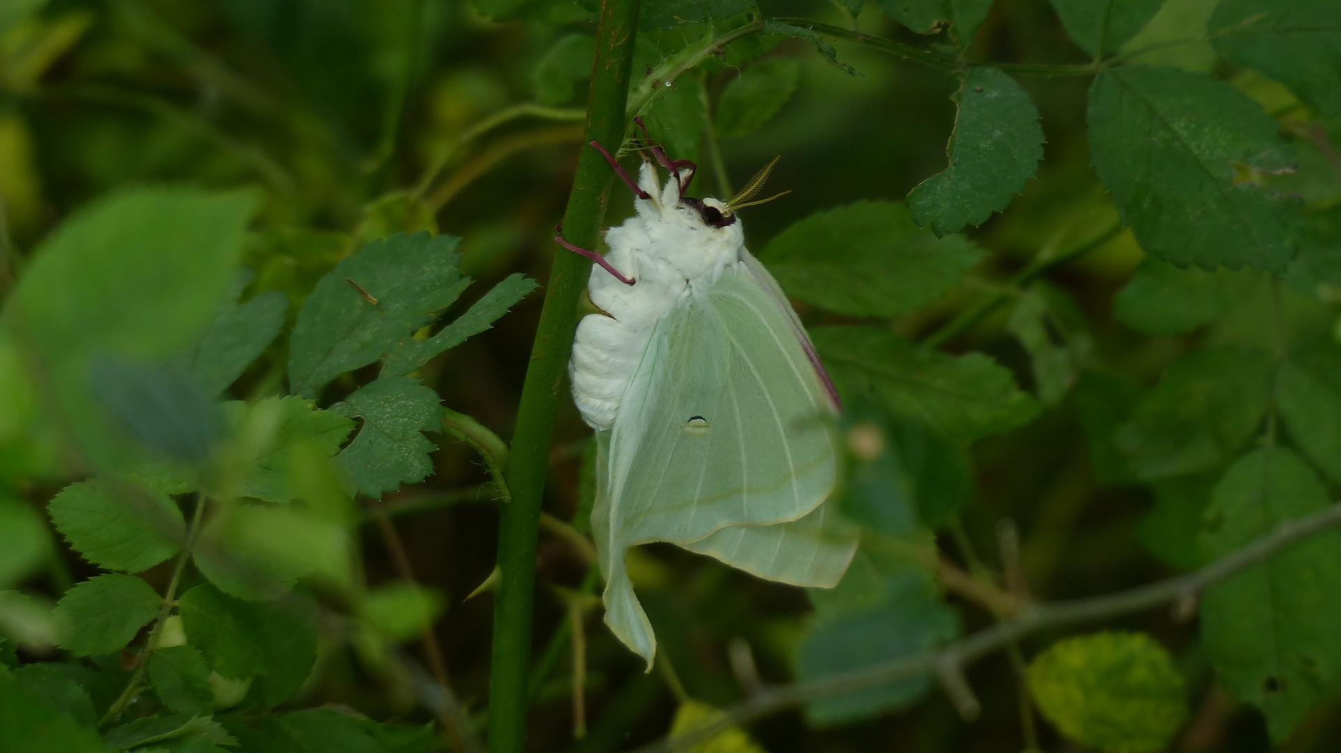 昆虫の森シリーズ 夕顔瓢箪とも呼ばれます_a0185081_1140777.jpg