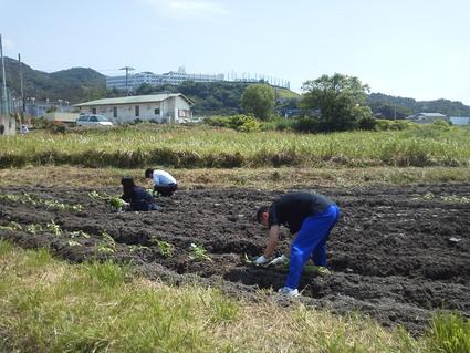 岬高校:畑から   by  (ナベサダ)_f0053885_2114795.jpg