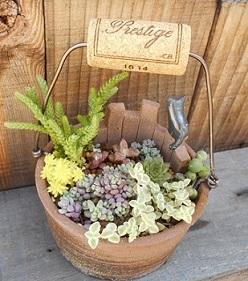 多肉・サボテンの鉢と寄せ植え販売中です_e0063296_1734487.jpg