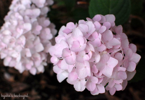 花壇の様子(6月中旬)_b0253205_03375097.jpg