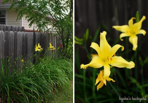 花壇の様子(6月中旬)_b0253205_03390356.jpg