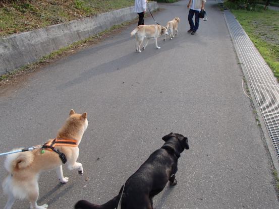 仲良くなるには一緒に散歩が早道_f0064906_15464336.jpg