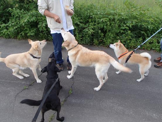 仲良くなるには一緒に散歩が早道_f0064906_1546575.jpg