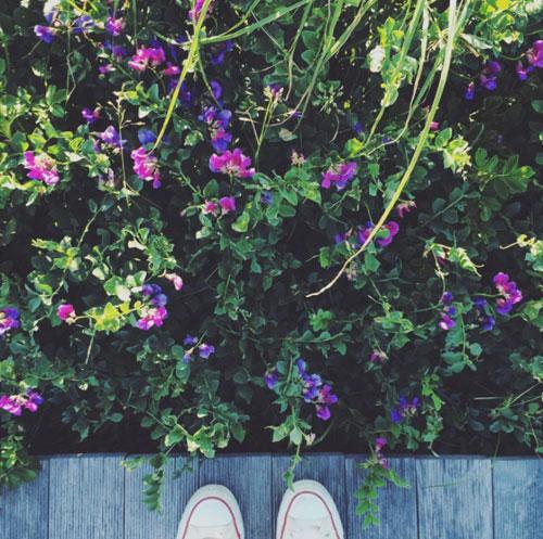 季節の花 ハマナスを観に_f0032814_1147353.jpg