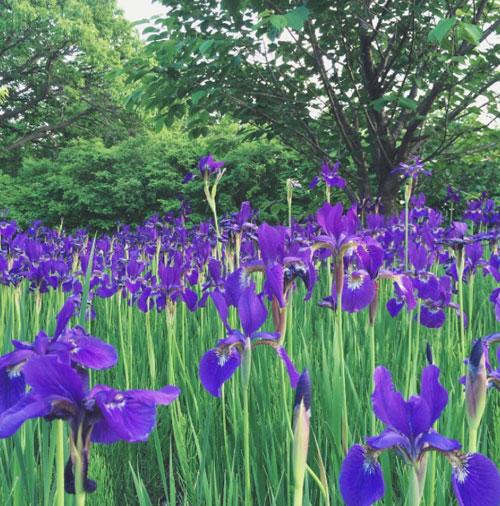 季節の花 ハマナスを観に_f0032814_1147388.jpg