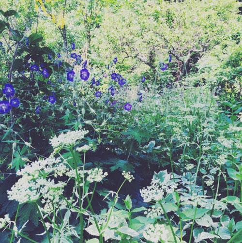 お花とロロ_f0032814_11543431.jpg