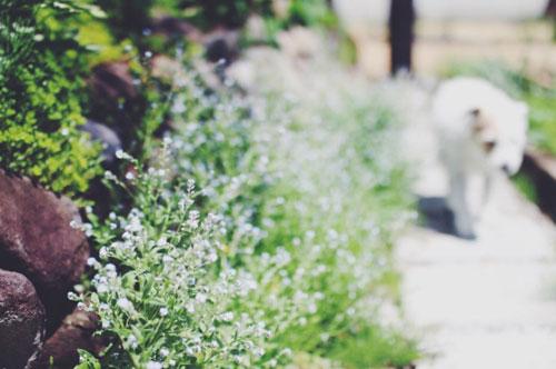 お花とロロ_f0032814_11574688.jpg