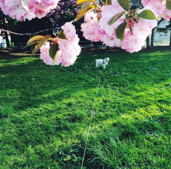 花が咲く頃_f0032814_154620.jpg