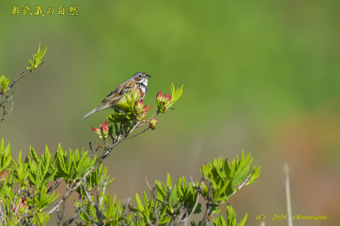 高原の鳥_e0268015_12322342.jpg