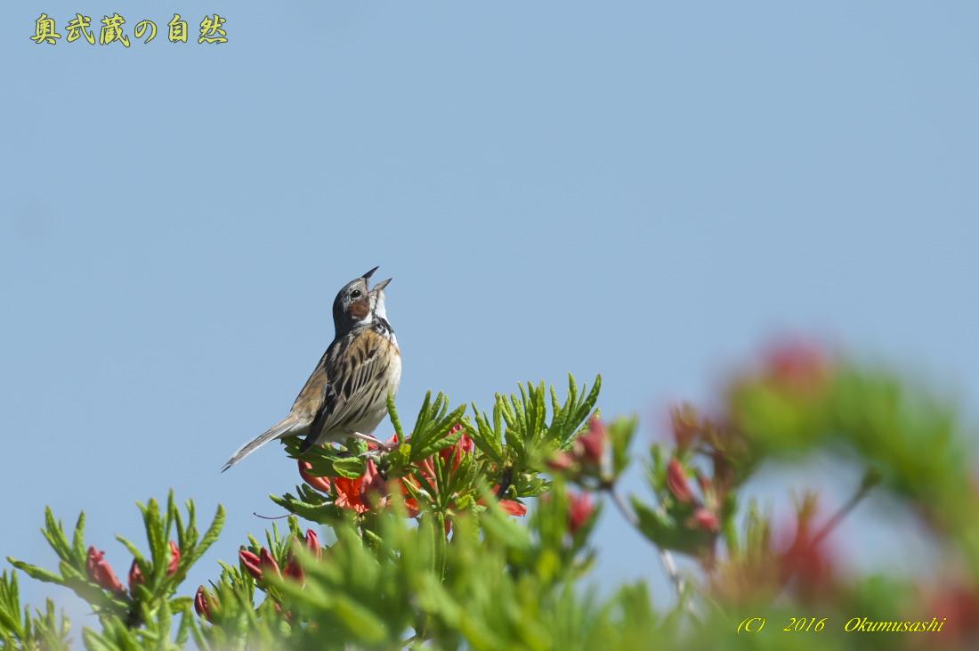 高原の鳥_e0268015_1232256.jpg
