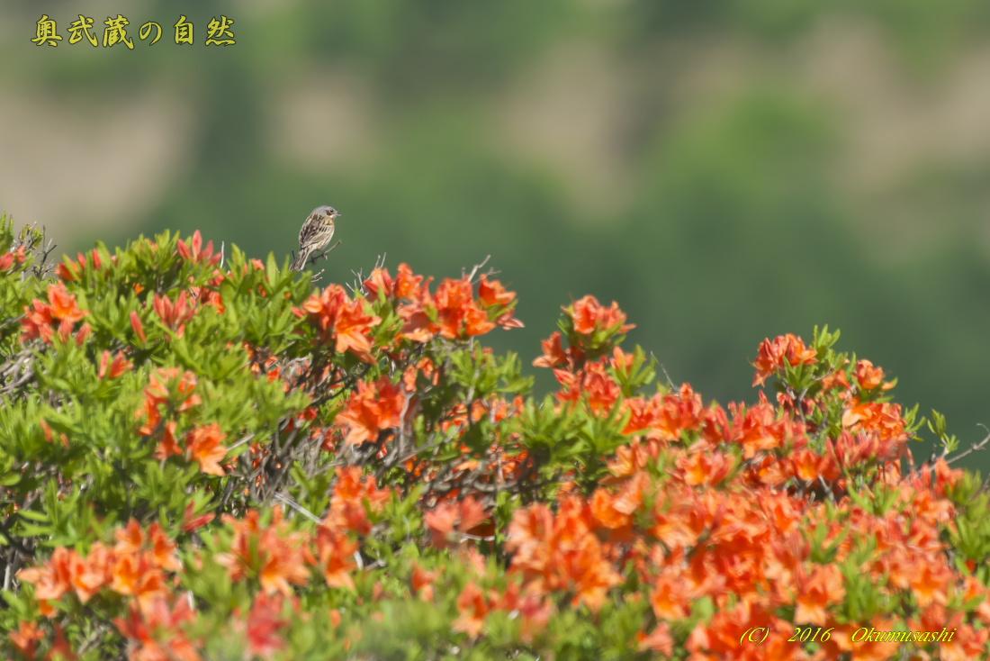 高原の鳥_e0268015_12331414.jpg