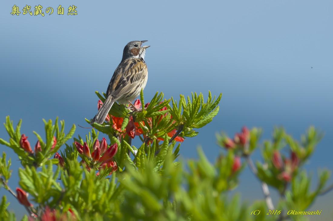 高原の鳥_e0268015_1234390.jpg