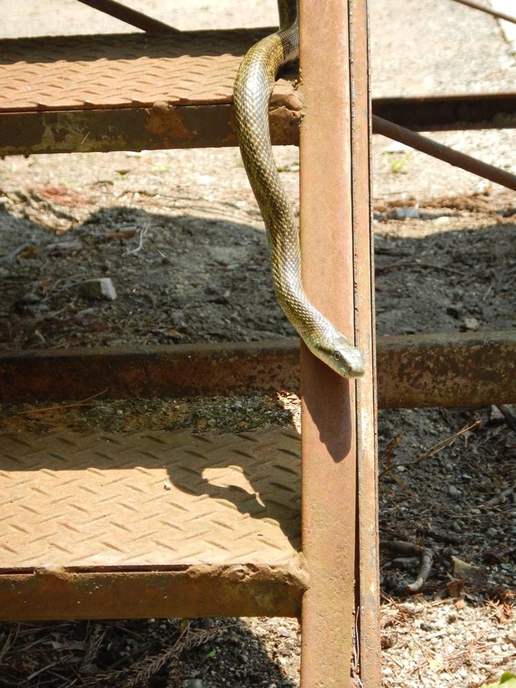 ヘビに出会う_c0111229_18401662.jpg