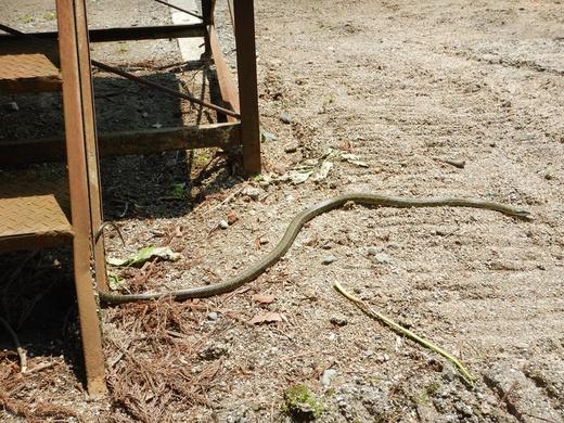 ヘビに出会う_c0111229_18402273.jpg