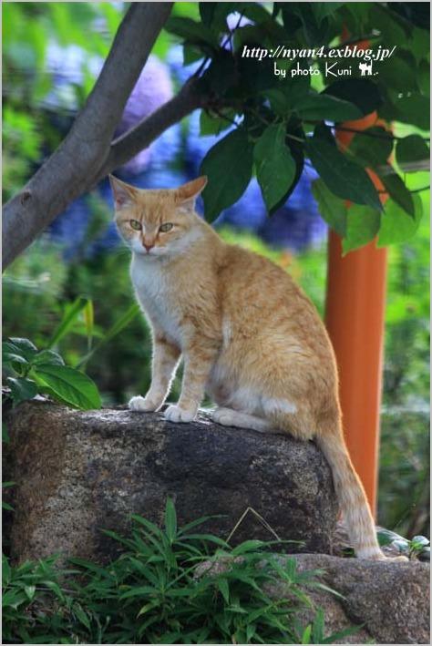 その後の子猫達_f0166234_13274146.jpg
