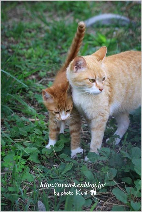 その後の子猫達_f0166234_13281512.jpg
