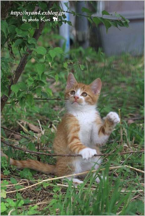 その後の子猫達_f0166234_13293730.jpg