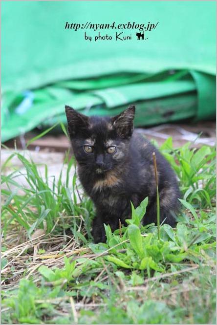 その後の子猫達_f0166234_13525683.jpg